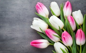 flowers, buds, bouquet, tulips