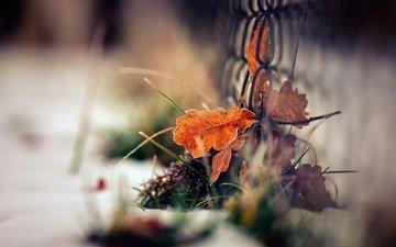 трава, листья, макро, осень, забор, сетка