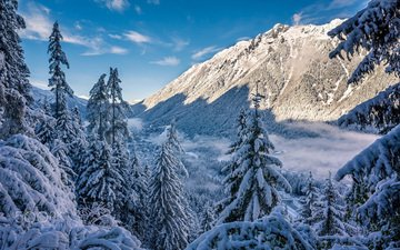 the sky, trees, mountains, snow, forest, winter