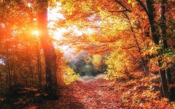 trees, nature, forest, leaves, autumn, path