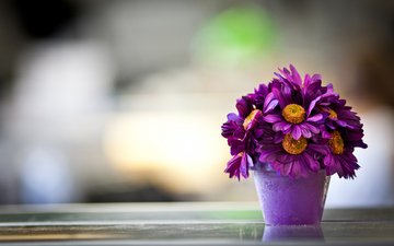 flowers, petals, purple, pot, daisy