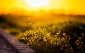 flowers, grass, the sun, sunset, macro, morning, horizon