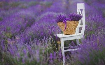 цветы, поле, лаванда, стул, букет, корзина