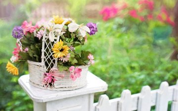 flowers, nature, summer, the fence, bouquet, basket