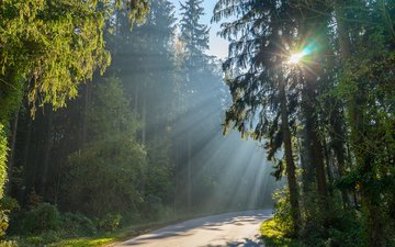 road, trees, the sun, nature, forest, summer