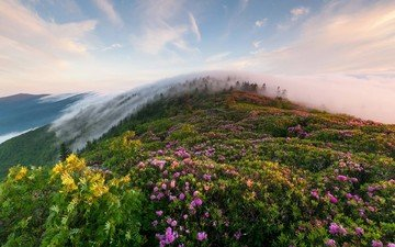 the sky, flowers, grass, clouds, mountains, hills, nature, morning, fog