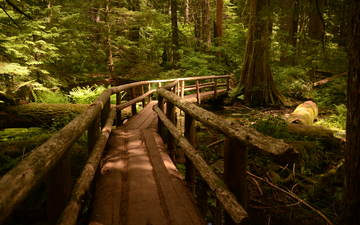 trees, forest, landscape, track, trunks, bridge, pine, oregon, wooden surface