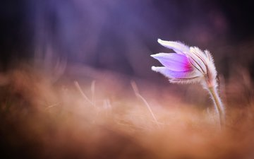 flower, blur, spring, sleep-grass, cross