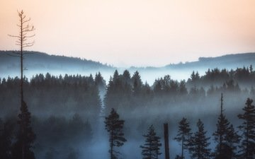 nature, forest, landscape, morning, fog, pine