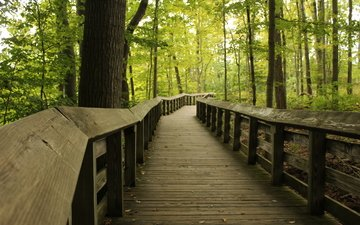 trees, track, trunks, bridge, ohio, wooden surface, oaks