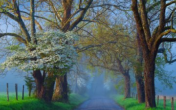 road, trees, nature, fog, branches