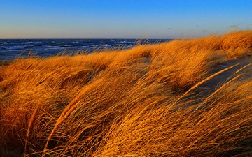 the sky, grass, shore, wave, sea, autumn, the wind