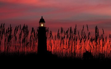 the sky, clouds, plants, sunset, lighthouse, the beacon light