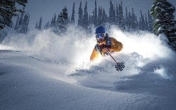 trees, snow, winter, speed, skier