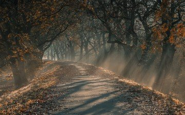 light, road, trees, forest, leaves, winter, landscape, morning, fog, autumn, germany, the sun's rays, chris hornung