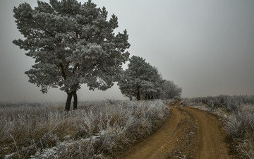 road, trees, nature, plants, landscape, morning, fog, frost