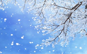the sky, branch, snow, nature, tree, winter, macro, snowflakes, branches