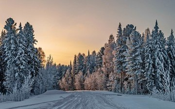 road, trees, snow, nature, forest, winter