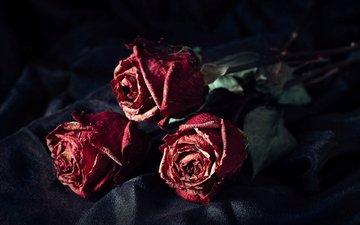 цветы, розы, лепестки, черный фон, букет, сухие