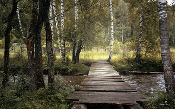 nature, birch, bridge, grove