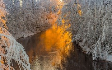 trees, river, nature, forest, branches, frost
