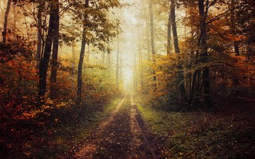 trees, nature, forest, autumn, path
