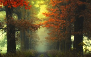road, trees, nature, forest, fog, autumn