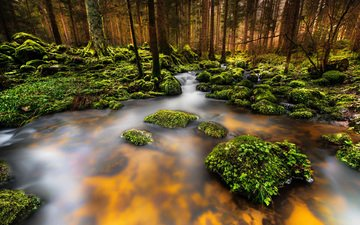 trees, river, nature, stones, forest, stream, moss