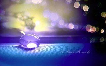 water, macro, drop