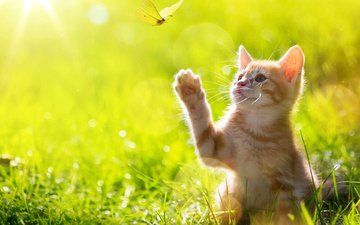 grass, cat, butterfly, kitty, red, foot