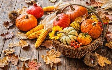 листья, осень, кукуруза, корзина, урожай, тыквы, каштаны, alexander raths, осень.урожай