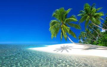 природа, пейзаж, море, пляж, пальмы, остров, курорт, тропики, сейшелы, atanas bozhikov