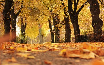 trees, nature, leaves, park, autumn