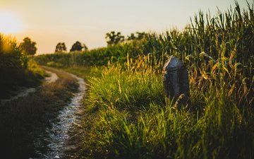 road, grass, nature, field, summer