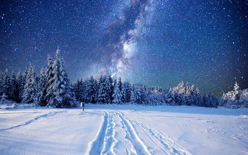 road, night, nature, forest, winter, stars