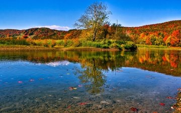 lake, nature, forest, leaves, landscape, autumn