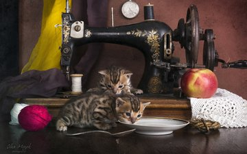 cats, kittens, sewing machine, bengal cat