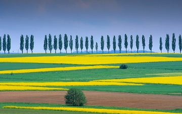 trees, nature, landscape, field, italy, germany, rape, bing, lower saxony, eichsfeld, duderstadt