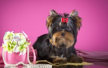 flowers, dog, puppy, necklace, bow, york, yorkshire terrier