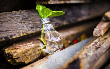 leaves, board, plant, light bulb