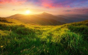 grass, the sun, hills, nature, landscape, meadows, biletskyi use
