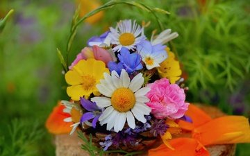 flowers, chamomile, bouquet, wildflowers