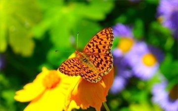 цветы, насекомое, фон, бабочка, крылья, размытость