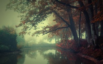 river, nature, forest, fog, autumn