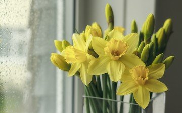 flowers, drops, spring, bouquet, window, glass, daffodils