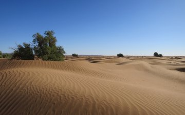 nature, landscape, sand, desert, dunes