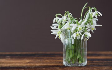 flowers, spring, vase, snowdrops