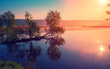 the sky, trees, lake, river, the sun, forest, reflection, fog, dawn