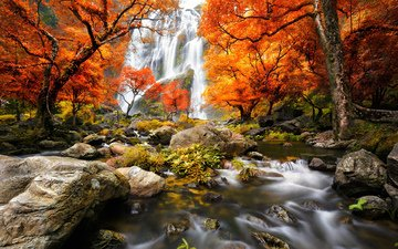 grass, trees, river, stones, forest, waterfall, autumn, moss