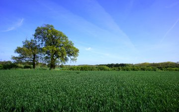 the sky, grass, trees, landscape, field, horizon